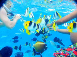 Feeding the fish at our coral garden stop produced countless tropical fish swarming around us. We've never seen so many beautiful fish and have snorkeled extensively in the Caribbean and Hawaii. We ... , Marco - November 2015