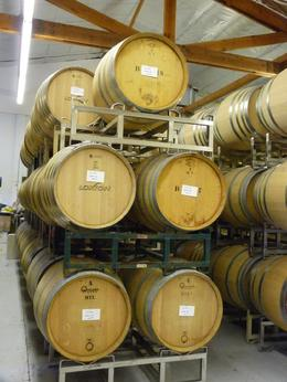 We could walk through the barrels at Loxton., Kelly G - February 2010