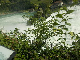 Rhine Falls, High Water, flow rate est. 900 m/sec, June.2016 , Rebecca M - July 2016