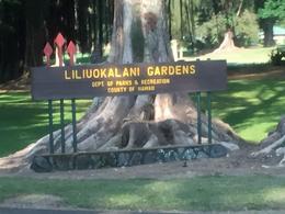 Tea Garden in Hilo, Tea Garden in Hilo , patty_brooks - February 2017