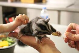 Feeding a little fella! , Elodie D - March 2014