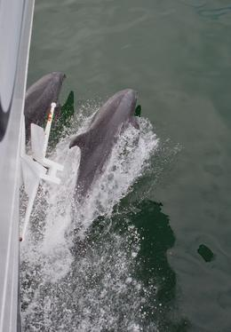 We had a dolphin escort in and out each day. , Greg H - May 2013