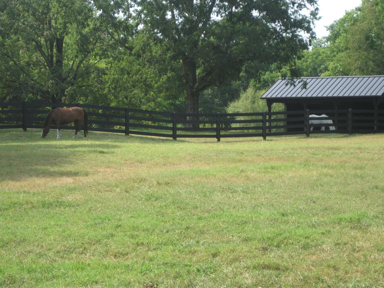 Horses at Belle Meade - Nashville
