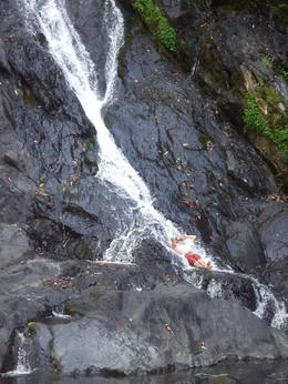 Niau Falls - January 2010