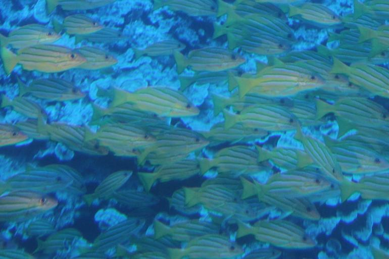 Underwater View - Maui