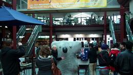 Koala Bear statue, Undercover Américan - August 2011