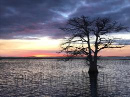 This single tree in the lake at sunset was just too spectacular!, JennyC - January 2017