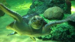 Turtle, JennyC - July 2011