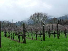 Pretty vines at Loxton., Kelly G - February 2010