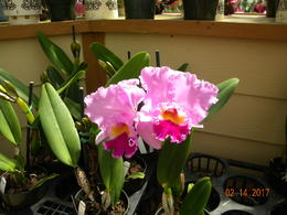 Orchid Greenhouse Stop , patty_brooks - February 2017
