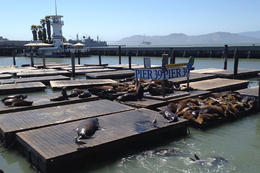 Sea lions!, Jules & Brock - July 2012