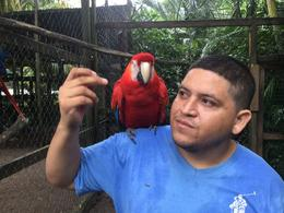 Parrots, Macau's and Monkeys will sit on your shoulder or head. , David S - December 2014
