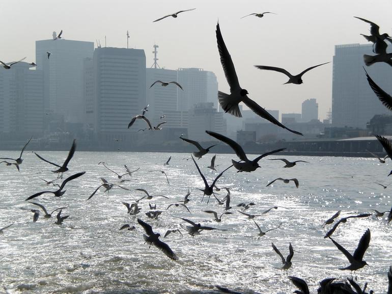Birds - Tokyo