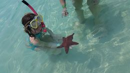 The water in Roatan is so clear you can see many fish and even starfish! , Barbara L - May 2016