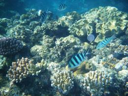 We were able to see loads of colorful fish. water was so clear and warm. We would do it again in a heartbeat. , Don S - June 2012