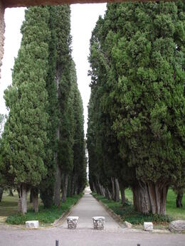 Pathway of Cypress Trees , Duayne K - June 2012