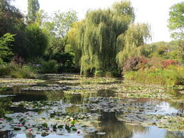 The famous lily pad garden. , Joanne T - October 2014