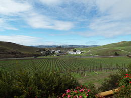 The picture from NICHOLSON RANCH which is the first winery that you will visit , Sue Jean C - March 2014