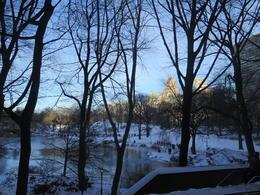 Central Park , Dawn W - February 2017