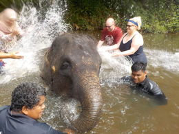 Bathing a baby elephant at the sanctuary , reasley - August 2016