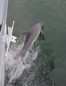 We had a dolphin escort in and out both days. , Greg H - May 2013