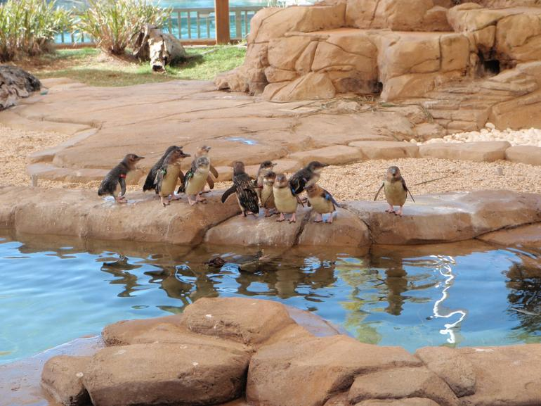 Penguins at Sea World -