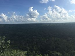 you can see the whole jungle around Coba, Cat - November 2015