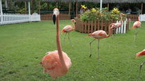 Ardastra Gardens, Zoo & Conservation Park