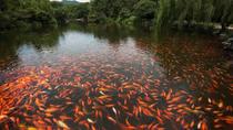 Red Carp Pond