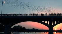 Congress Avenue Bridge Bats