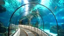 Barcelona Aquarium (L'Aquarium)