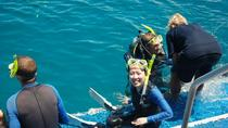 Great Barrier Reef Diving & Snorkeling