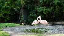 Frankfurt Zoo (Zoologischer Garten)