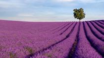 Lavender Tours