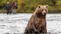 Bear Viewing Tours in Alaska