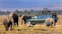 How to Choose a Safari in Kenya