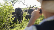 Safaris from Johannesburg