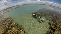 Maracajau Reef (Parrachos de Maracajau)