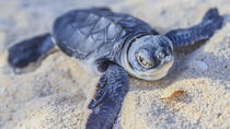 Best Places For Seeing Turtles on the Big Island