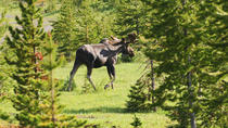 How to Spot Wildlife in Banff National Park