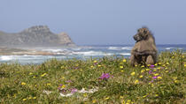 Wildlife Safaris from Cape Town