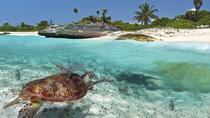 Sealife of Grand Cayman