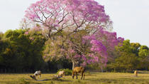 Day Trips to the Pantanal from Bonito