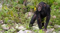 Chimp Eden: The Jane Goodall Institute