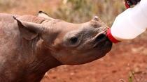 Moholoholo Wildlife Rehabilitation Center