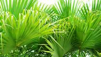Gizella Kopsick Palm Arboretum