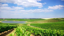 Alentejo Wine Tours From Lisbon