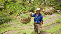 Exploring the Rice Paddies of Bali
