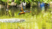 Guandu Nature Park