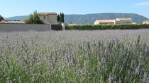 Coustellet Lavender Museum